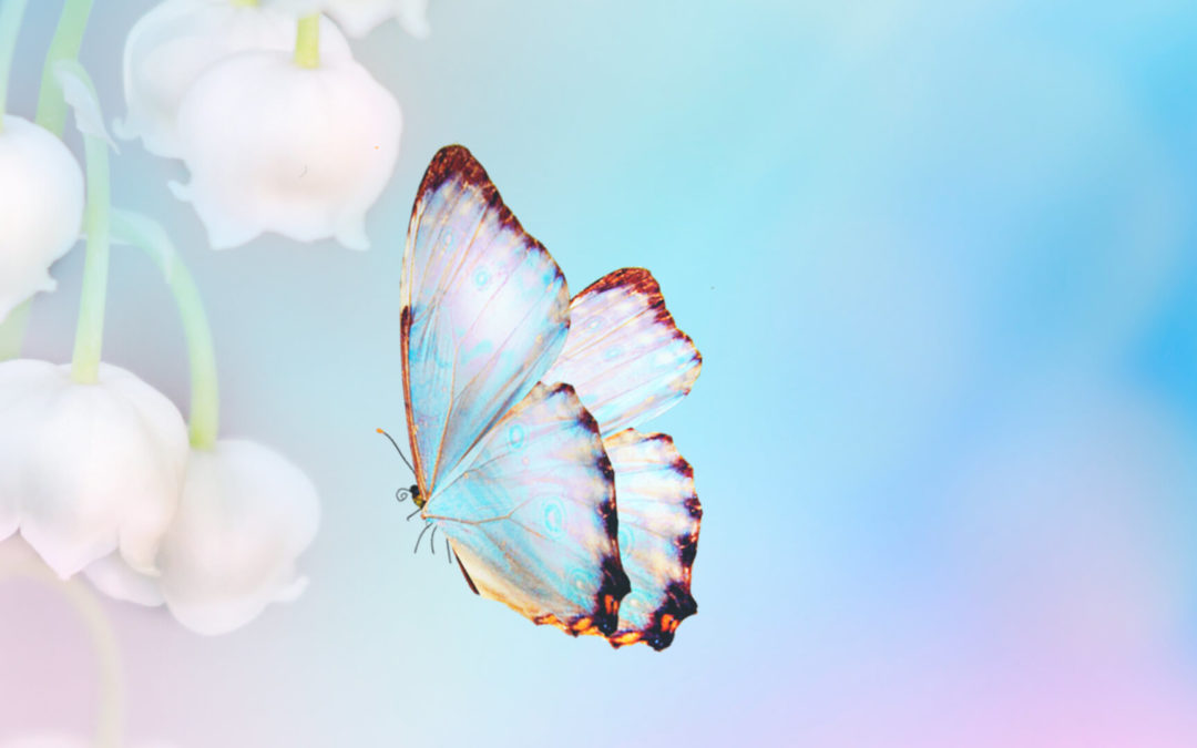 Butterfly Medicine